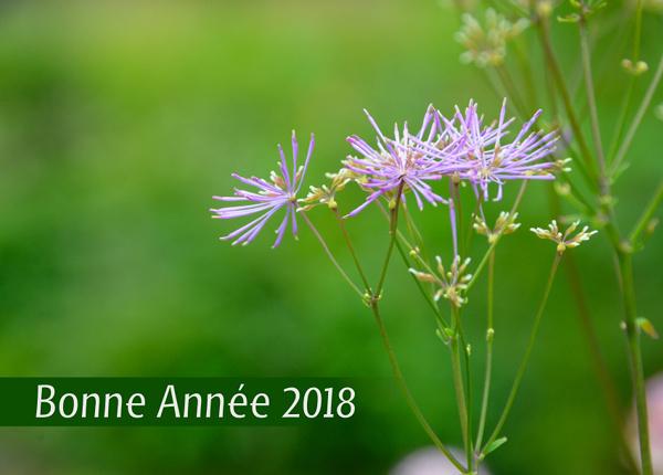 Flowers, Bonne Année 2018